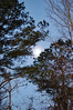 Moon And Trees. (dccradio) Tags: lumberton nc northcarolina robesoncounty outside outdoors tree trees nature natural greenery pine evergreen sky morning morningsky bluesky goodmorning earlymorning moon lunar branch branches treebranch treebranches treelimbs sticks nikon d40 dslr
