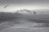 Greymouth Breakwater (wagnerchristian.com) Tags: sea weather dark death dangerous storm clouds lights birds seagull nature waves ocean mist newzealand oceania summer contrast landscape island coast beach