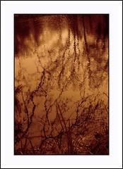 à fleur de peau . . . Monochrome (nickylechatreux) Tags: eau environnement écologie monochrome reflet rivière nature nervures macromondays arbre