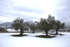 oroelolivos (gravalosantonio) Tags: jaca spain invierno nieve pirineos huesca