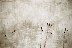 Against the wall... (Maria Godfrida) Tags: 7dwf sepia wall textures plants nature againstthewall minimalism minimalistimage
