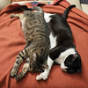 Weekend Pleasures (AnyMotion) Tags: nelli mira sisters schwestern sleepingonthecouch pet cat cats katze katzen animals tiere 2017 anymotion blackandwhite schwarzweis blancoynegro félin chat gata 6d canoneos6d square 1600x1600