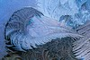 Flourish (Broot Thanks for 0.85 million views!) Tags: frost ice crystal flower curl figure pattern freeze january 2018 window translucent tenantsharbor maine usa winter beautiful elegant ephemeral