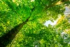 Green nature (icemanphotos) Tags: ecology solitude meadow sunlight summer nature rays