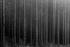 I I I I - Kodak Tmax 100 (magnus.joensson) Tags: sweden swedish skåne tree blackandwhite bw contax aria kodak tmax 100 selfdevelop adonal epson v800 scan monochrome zeiss cy 100mm sonnar