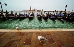 Seagull's dream (alternata_) Tags: venezia venice italia italy winter seagull coldwinter febbraio travel traveller viaggio sea