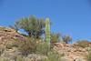 Young Saguaro Cactus (craigsanders429) Tags: cactus saguarocactus arizona sonorandesert desert tucsonarizona mountains americanwest rocks