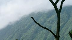 Waipio (152) (BoyUtot) Tags: waipiovalley waipiofalls waimea surfing hiking trekking dronephotography mavic panasonicgh1 hawaii bigisland lumix 100300mm travel nature landscape seascape honokaa ramesesmendoza