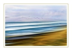 Freedom (Christina's World-) Tags: seascape sandiego scenic sky sea serene seasons seagulls seaside sand outdoors ocean romantic rothkoesque artistic art abstract flying flight seashore creative california colorful clouds beach coastal coast delmar flockofbirds dramatic blur colors pastels minimalistic nature exotic frame border