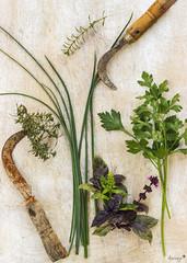 Aromàtiques (ancoay) Tags: herbes picado stillife 7dwf hierbas aromaticas huerto aromatic herbs orchard spices especias crazytuesdaytheme canon600d ancoay