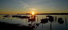 Etang de Thau : la Crique de l'Angle (Michel Seguret Thanks for 11,4 M views !!!) Tags: france herault etang pond thau eau water wasser acqua agua port haven hafen harbour michelseguret nikon d800