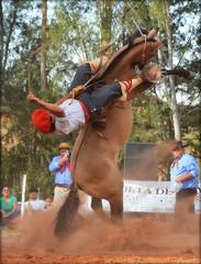 Mica Lopes e Minissaia da Très Coroas (Eduardo Amorim) Tags: gaúcho gaúchos gaucho gauchos cavalos caballos horses chevaux cavalli pferde caballo horse cheval cavallo pferd pampa campanha fronteira quaraí riograndedosul brésil brasil sudamérica südamerika suramérica américadosul southamerica amériquedusud americameridionale américadelsur americadelsud cavalo 馬 حصان 马 лошадь ঘোড়া 말 סוס ม้า häst hest hevonen άλογο brazil eduardoamorim gineteada jineteada