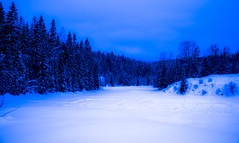 Cooling you off with my winterwonderland (evakongshavn) Tags: bluetiful blue winter winterwonderland winterwald winterlandscape snow cold brrr crisp crispair landscapephotography landscape landschaft paysage forest wald foret trees tree hivernal hiver new light white
