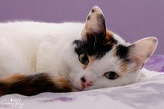 Treacle (geraintparry) Tags: cat cats pet pets animal animals treacle geraint parry geraintparry nikon nikond500 d500 sigma sigma105mm 105mm macro lens macrolens