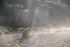 Narcissus blooming in the morning light (shinichiro*@OSAKA) Tags: 20180106sdqh3368 2018 crazyshin sigmasdquattroh sigma1770mmf284dcmacrohsm january winter flower macro narcissus 水仙 kyonan chiba japan jp 38743302835 2199675 201801gettyuploadesp