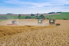 Highlands Wheat Harvest | CLAAS (martin_king.photo) Tags: 2017harvestseason 2017 barleyharvest 3x claaslexion760apshybrid combineharvester claasvario900 header brothersinarms agromerin harvesttime harvest2017 1 allclaaseverything claasfans claasphotos field plains landscape hills hillylandscape summer work tschechischerepublik powerfull martinkingphoto machines strong agricultural greatday great czechrepublic welovefarming agriculturalmachinery farm day working modernagriculture landwirtschaft moisson machine machinery unloading perardagri farmworld farmlife tracs clouds cloudyday sky bluesky canon