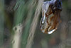 Gota. Drop 75. (bego vega) Tags: gota drop droplets rain lluvia macro madrid vf bego vega veguita bv begovega