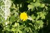 Ψίνθος (Psinthos.Net) Tags: ψίνθοσ psinthos ιανουάριοσ γενάρησ january winter χειμώνασ φύση εξοχή nature countryside afternoon απόγευμα απόγευμαχειμώνα χειμωνιάτικοαπόγευμα λουλούδια άγριαλουλούδια αγριολούλουδα wildflowers yellowflowers κίτριναλουλούδια χόρτα greens pollen γύρη field χωράφι κιτρινάκια ηλιόλουστημέρα sunnyday φώσ φώσήλιου φώσηλίου sunlight light