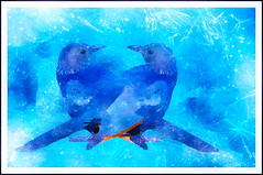 Winter Birds (Swissrock-II) Tags: challenge birds texture photoshop photoart digitalart winterbirds blue pixlr lightroom 2018 january
