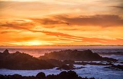 2018-Jan-California-463 (4x4Foto) Tags: 2018 bigsur california deetjensrestaurant emeraldbay january montereybay pacificcoasthighway pacificgrove pacificocean southlaketahoe flowers ocean plants rocks sunset sunshine surf surfing travel trees waves virginia unitedstates
