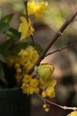 180124015 (murbozero) Tags: murbo japan flower