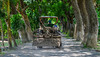 A tractor running on rural road (phuong.sg@gmail.com) Tags: agricultural agriculture country countryside cultivate cultivator earth engine equipment farm farmer farming farmland field ground grower hauling heavy industrial iron machine machinery mechanism metal modern motor mover peasant plow power road soil spring tillage tiller tool tractor trailer transport transportation useful way wheel work worker