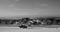 Winter im Vogtland (fleckchen) Tags: winter winterlandschaften schnee schneelandschaft schneelandschaften schneeszene vogtland sachsen snowy snowcape kühe rinder tiere häuser cows bovine deutschland germany