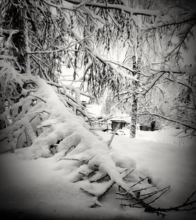 My larch's branch, outside my window, is no longer visible from inside.