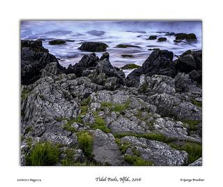 Tidal pools, Nfld., 2016