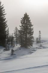 flattnitz02 (Martin Schachermayer) Tags: kärnten flattnitz österreich europa landschaft nebel sonnenaufgang winter schnee bäume carinthia austria europe landscape mist sunrise snow trees hdr nikond600 digital