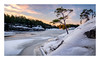 Just a pine tree on an edge (Andreas Larzon Photography) Tags: fujinonxf1024mmf4rois fujixt1 landscape landscapephotography sverige sweden winter stendörrensnaturreservat södermanlandslän naturereserve sunrise