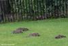 DSC_1509 Mole Holes Dunkeld (TrishJ06) Tags: dunkeld scotland unitedkingdom gb