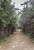 Path near Tennis Court (cunningba) Tags: 2014 bestwesternlevalmajourhotel europe fontvieille france path garden tenniscourt ©2014barrycunningham provencealpescôtedazur fr