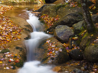 Autumn Brook in the White Mountains