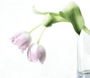 Almost Spring (louise peters) Tags: tulips spring tulpen highkey voorjaar vaas bloemenvaas vase pink roze green groen glass glas bloemen flowers leaf leaflet steel stengel stem