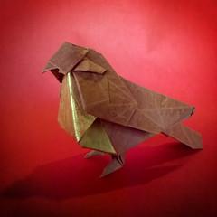 Pequeño pájaro - Dai Watanabe (Stefano Borroni (Stia)) Tags: origami papiroflexia origamilove origamiart folding carta piegarelacarta cdoitalia uccelli uccellino birds pajaro animals volatili arte sparrow bird animali