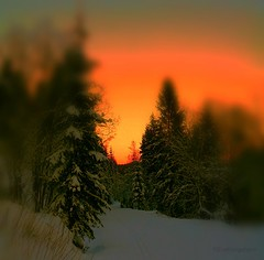 I like it stirred, not shaken, thank you (evakongshavn) Tags: snowglobe sunset snow snowfall winter winterwonderland winterwald winterlandscape wonderlandscape wonderfulworld wonderland woodland wood postcardsfromtheworld exploretheworld new light orange yellow landscape landschaft paysage natur nature cold frost frozen colours