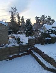 overnight snow (mistdog) Tags: snow whorlton dawn predawn gardens houses photoscapex