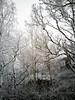 20180118,19 Snö! (Sina Farhat - Webcoast) Tags: light ljus winter vinter snow snö home hemma cold kallt white vit 2018 january januari garden trädgård gothenborg göteborg sweden sverige 031 bokeh skärpedjup raw photoshopcc huaweip9lite mobile