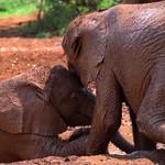 Elephant Orphanage thumbnail