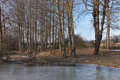 """Frozen """"Prince's pond"""" (Karel Suchánek) Tags: winter pond frozen frost ice sunshine afternoon velkáhleďsebe lumix lx100 knížecírybník knížák"""