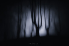 Akelarre (Mimadeo) Tags: scary dark night forest halloween nightmare horror lost fear mood moody atmosphere atmospheric monochrome blue landscape magic tree shadow light evening nature mystery mist spooky foggy darkness misty woods evil creepy fantasy gothic mysterious surreal silhouette enchanted ghost moonlight bare haunted eerie fog blur paranoia shadows