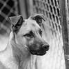 De27Jan201825-Edit.jpg (fredstrobel) Tags: dogs pawsatanta phototype atlanta blackandwhite usa animals ga pets places pawsdogs decatur georgia unitedstates us