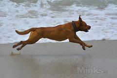 Escuela de fotografia viña del mar (Thanks for + 700.000 Views) Tags: chilevregiónafiapaméricafotografíaarteartbeautifulelisardominksfinephotographyphotographerphotographyproelisardominksartfotografíaafiapfinephotographyphotographerbeautifulfavcoloranimalaguaocéanoplayadog animales animals animaux animali tiere animais dieren agua animal perro dog océano playa