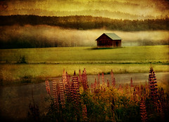 Summernight (BirgittaSjostedt- away for a while.) Tags: landscape summer night forest sunrise flower field texture paint light haze fog barn lenabemanna birgittasjostedt