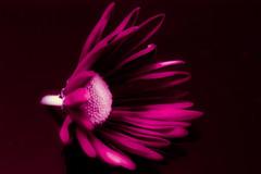 Macro Monday - Monochrome (jmiller35) Tags: flores flora fleur monotone pinkflower natureza nature flower monochrome macromonday macro