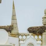 Stork nests thumbnail