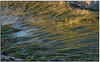 _DSC8309-aa (tellytomtelly) Tags: middlebeach tofino britishcolumbia canada reflection green seagrass
