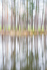 tree line ICM (markhortonphotography) Tags: intentionalcameramovement blur pine markhortonphotography nature water icm lake surrey swinleyforest thatmacroguy reflection bagshot trunk rapleylake silverbirch isolated tree forestry verticalpanning
