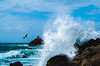 Cyclone Gita makes a splash (Tread__Lightly) Tags: shag cormorant birds sea animals wildlife wildlifephotography ocean storm cyclone waves splash beautiful weather pentax k30 newzealand nz conservation surf tauranga
